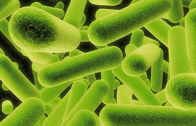Bacteria nucleic acid kits