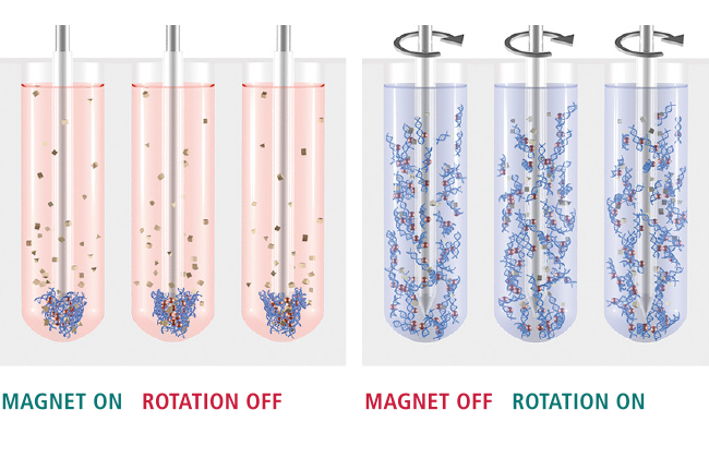 Magnetic Beads for nucleic acid purification