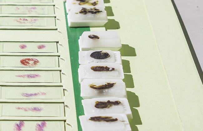 FFPE DNA kits